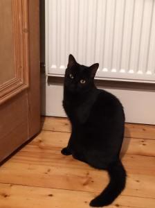 Lola black cat in bathroom